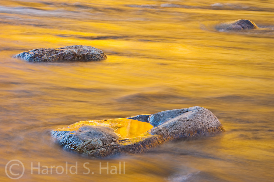 Brilliant gold fall colors reflect in the Swift River along the Kancamagus Highway in New Hampshire's White Mountain National Forest.