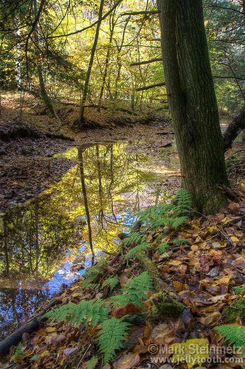 Fall foliage reflections in a small creek of Hocking State Forest, Ohio, USA