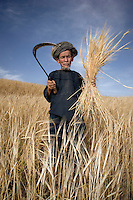 A farmer uses a scythe to harvest wheat.