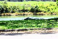 SÃO PAULO, SP - 25.02.2014 - CORPO DE EMPRESARIO NA RAIA DA USP- Corpo de empresário é encontrado na raia da USP, Cidade Universitária na zona Oeste de São Paulo, nesta manhã de terça-feira(25).FOTO: (Aloisio Mauricio / Brazil Photo Press)