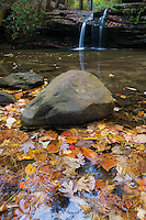 Fall leaves collect in pond under waterfalls on Carrick Creek