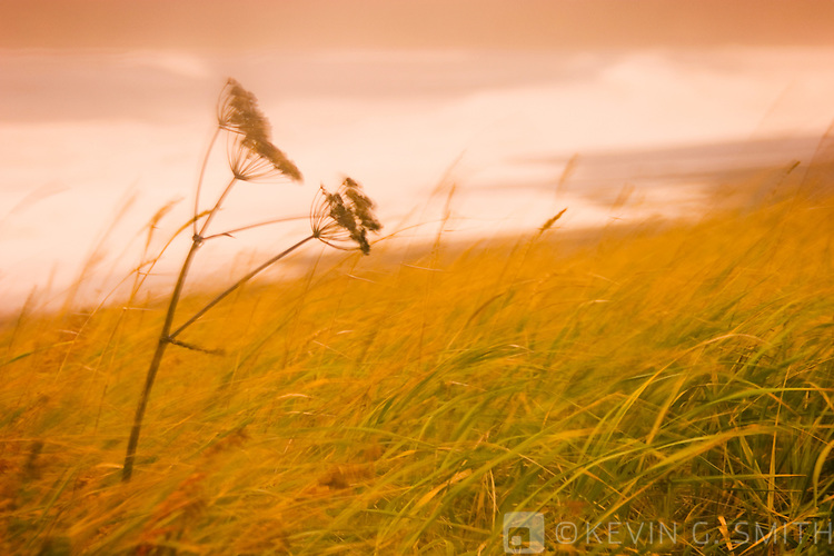 Cow parsnip and beach grass with waves breaking on beach, fall storm, blured motion, Cape Chiniak, Kodiak Alaska,USA