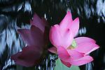 Lia Chang Botanical Beauties Series 9/5/09 at Brooklyn Botanic Garden. Photo by Lia Chang