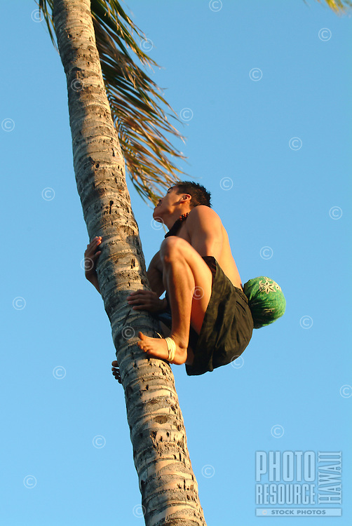 A Hawaiian man climbs a coconut palm tree at a luau on O'ahu.
