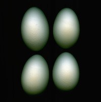 Four eggs on a black background