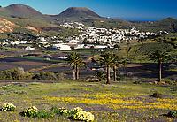 Spanien, Kanarische Inseln, Lanzarote, Blick auf Haria | Spain, Canary Island, Lanzarote, view at Haria