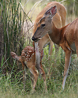 A Baby 'Tale', although there's not much left to the imagination here :)<br />