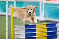 Queen City Agility Club  CPE February 2018