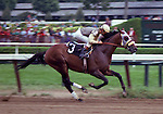 Winter's Tale, by Arts and Letters, raced for Rokeby Stable.  Won the G1 Marlboro Cup, Brooklyn Handicap and Suburban (twice), among other victories.<br /> <br /> 29-14-7-1.  $888,900.  Lived out his life at Rokeby, dying at age 26 at Rokeby Farm.