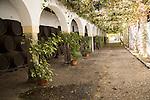 Historic courtyard with grapevines,  Bodegas Domecq, Jerez de la Frontera, Cadiz province, Spain