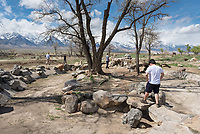 Assoc. prof. Paul Nam brought history to life with a History 248: Modern Japan class trip to Manzanar, one of ten camps in the U.S. where 110,000+ Japanese Americans were incarcerated during WWII. March 25, 2017.<br />