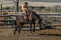 Chin up Cowboys working and playing. Cowboy Cowboy Photo Cowboy, Cowboy and Cowgirl photographs of western ranches working with horses and cattle by western cowboy photographer Jess Lee. Photographing ranches big and small in Wyoming,Montana,Idaho,Oregon,Colorado,Nevada,Arizona,Utah,New Mexico.