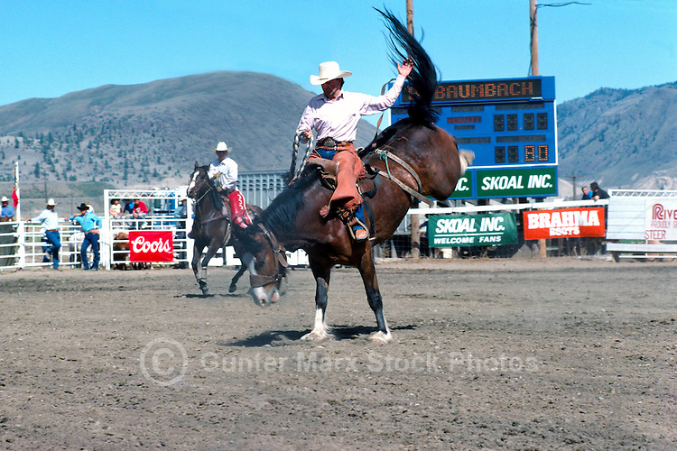 Cawston (near Keremeos), BC, British Columbia, Canada - Chopaka Rodeo, Similkameen Valley, Saddle Bronc Riding, Cowboy Rider on Wild Horse