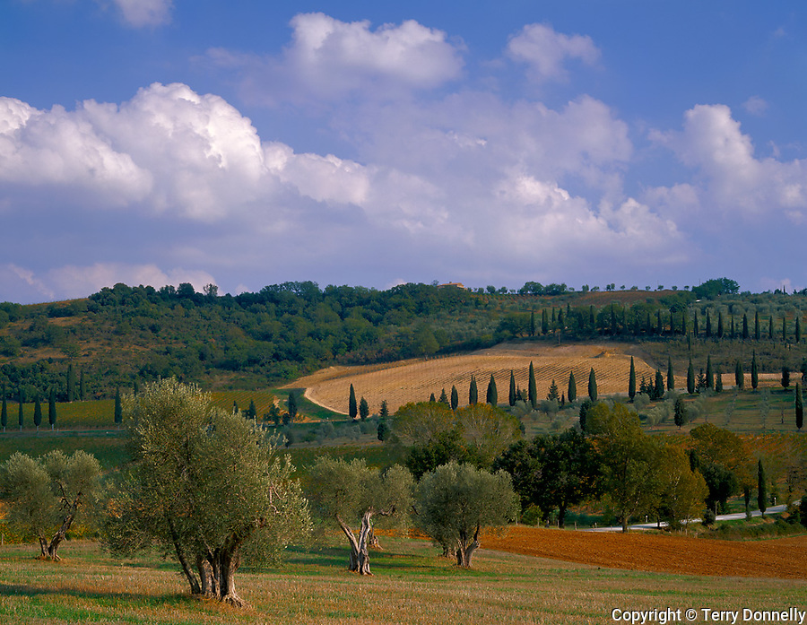 Tuscany, Italy: Rolling forested hills and fields of the Val d'Orcia with scattered olive and cypress trees near the village of Castelnuovo dell'Abate