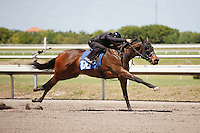 #108Fasig-Tipton Florida Sale,Under Tack Show. Palm Meadows Florida 03-23-2012 Arron Haggart/Eclipse Sportswire.