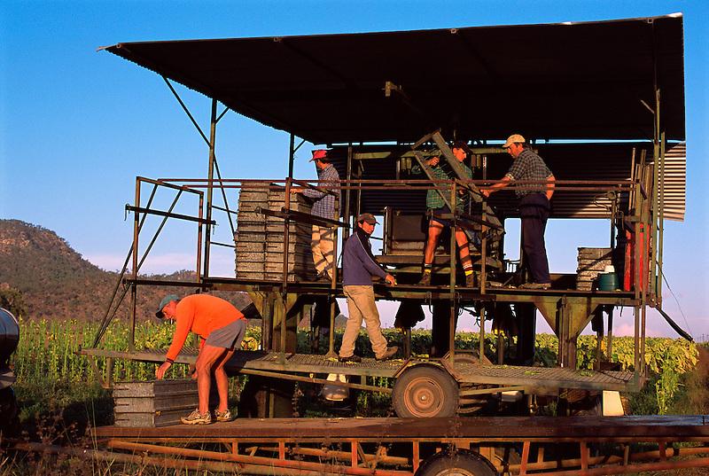 Loading Tobacco Trays, (l to r) Lui Falcomer, Nic Pokadin, Brian Schincariol, Edward and John Balzarolo, Schincariol's Farm, Dimbulah, 2003.