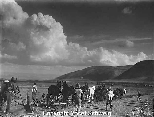 The first ploughing in the Jezreel Valley after a large purchase of 50,000 dunams of land, which permitted many new kibbutzim the opportunity for agricultural development.