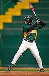 30 April 2008: University of Vermont Catamounts' infielder Justin Milo, a Sophomore from Edina, MN, in action against the University of Massachusetts Minutemen at Historic Centennial Field in Burlington, Vermont. The Catamounts recorded a season-high 19 hits as they defeated the Minutemen 17-4 in their last NCAA non-conference game of the year...Mandatory Photo Credit: Ed Wolfstein Photo