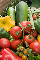 Tomato cluster with freshly harvested organic vegetables in basket in Rosalind Creasy garden