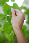 hands on leaves