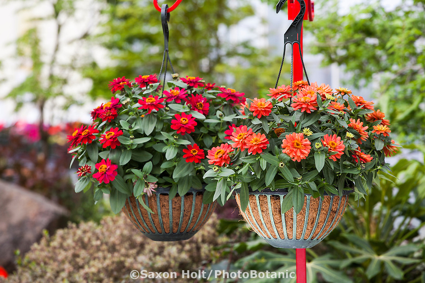 Hanging Flower Baskets Seattle : Hanging flower baskets planting a basket
