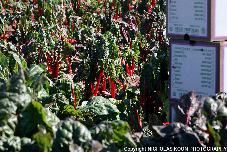 Heger Farms, California.