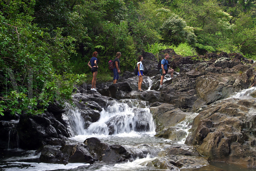 Two couples (MR) are crossing a stream in a rainforest near Hana, Maui, Hawaii.