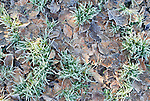 Frosty leaves and grass