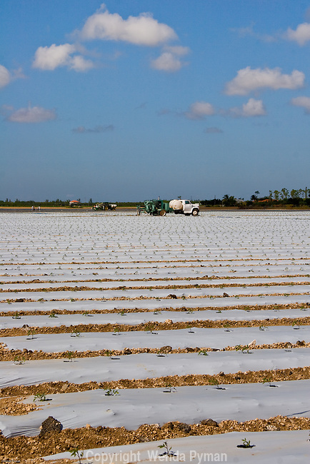 Agriculture competes for water with the delicate Everglades ecosystem.