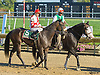 Days Like This before The Blue Hen Stakes at Delaware Park on 10/2/10