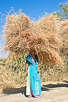 Driving along a small country road in rural Rajasthan, I was captivated by the sight of a group of women carrying huge bundles of hay on their heads. (Photo by Matt Considine - Images of Asia Collection)