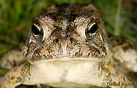 0602-0904  Fowler's Toad, Anaxyrus fowleri [syn: Bufo fowleri (Bufo woodhousii fowleri)]  © David Kuhn/Dwight Kuhn Photography