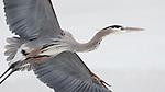 Heron-like
