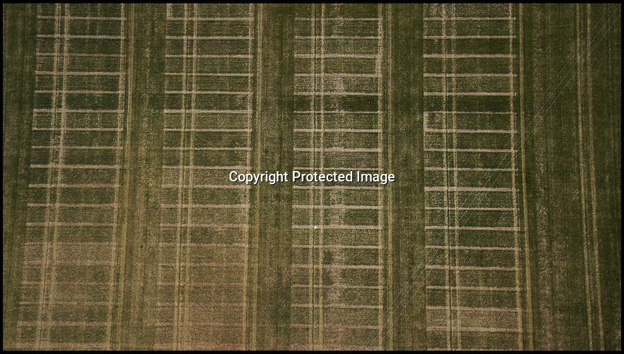 BNPS.co.uk (01202 558833)<br /> Pic: PhilYeomans/BNPS<br /> <br /> 'Actual' camera image<br /> <br /> Drone technolgy now reaches down to the farm.<br /> <br /> Plucky British scientists have come up with an ingenious way of surveying hundreds of acres of crops - by employing a 25,000 pounds drone helicopter used to film Hollywood movies.<br /> <br /> The cutting-edge custom-built gizmo, known as an octocopter, flies low over 800 acres of wheat fields taking measurements that help researchers better understand how crops grow.<br /> <br /> It can collect the same amount of information in a five-minute flight than a team of staff would collect in a day.<br /> <br /> A relatively recent invention, drone helicopters are more commonly seen on movie sets where they are used to film aerial shots.<br /> <br /> But the carbon fibre eight-rotor copter is now being put to work by boffins at Rothamsted Research, the longest running agricultural research station in the world.