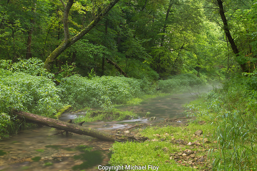 Trout Stream in early morning fog, Beaver Creek State Park.
