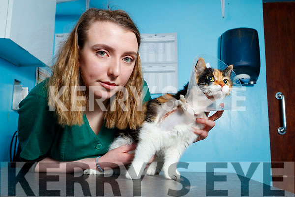 Katie Friel Veterinary Nurse pictured  with the Cat that was shot with a pellet gun.