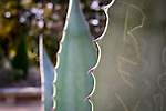 #pictureDukeFall<br /> Agave with Graffiti detail<br /> Photos in Sarah P. Duke Duke Gardens, November 14th 2014 as part of the Fall Gardens Photowalk