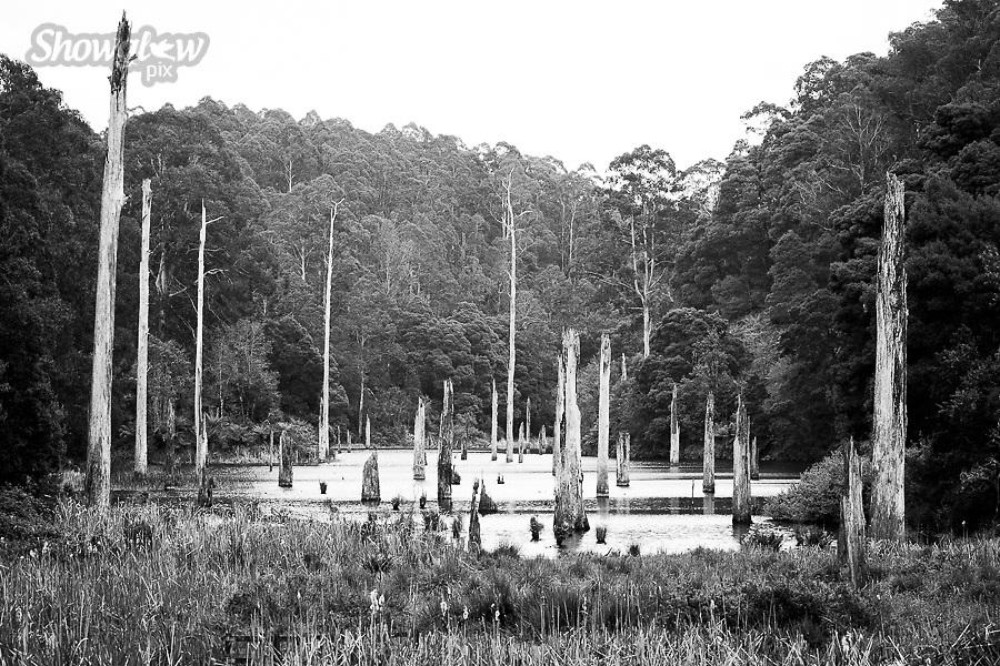Image Ref: CA610<br /> Location: Lake Elizabeth, Forrest<br /> Date of Shot: 20.10.18