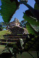 One of the Mayan Pyramids in Palenque, Chiapas