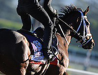 Delegation, trained by Mark Casse, exercises in preparation for the upcoming Breeders Cup at Santa Anita Park on October 29, 2012.