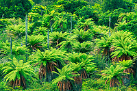 Lush green ferns and tropical plants define much of New Zealand.