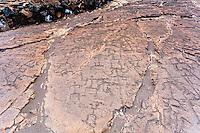 Hawaiian petroglyphs at Puako Petroglyph Park, Big Island, Hawaii