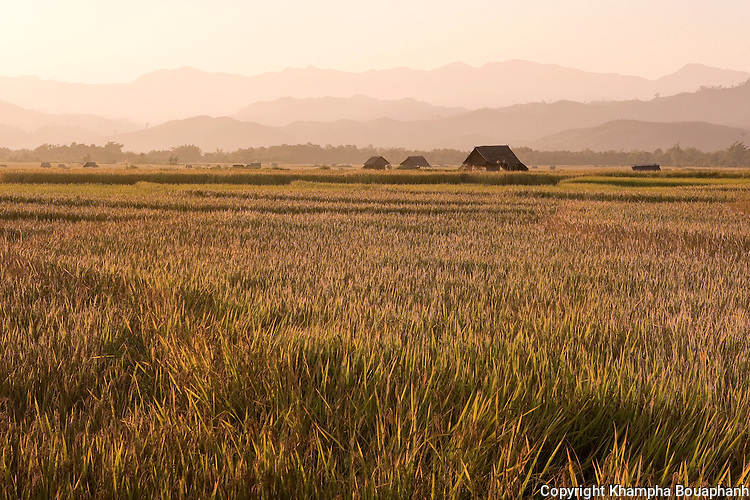 The sun sets over a rice field in Luang Namtha, Laos on November 9, 2009.   (Photo by Khampha Bouaphanh)
