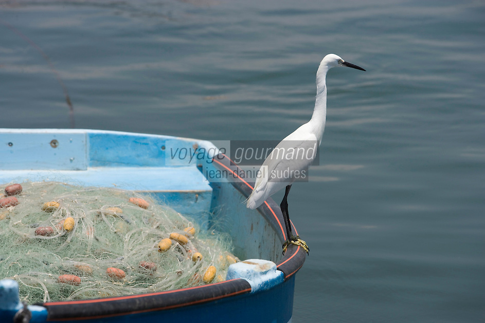Asie/Israël/Galilée/Saint-Jean-d'Acre: oiseau migrateur sur une barque des pécheurs du vieux port