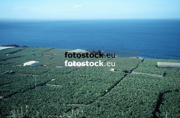 Banana plantations en La Palma de Gran Canaria<br /> <br /> Plantaciones de pl&aacute;tanos en La Palma de Gran Canaria<br /> <br /> Banaeneplantagen auf La Palma de Gran Canaria<br /> <br /> 3803 x 2490 px<br /> original: 35 mm slide transparency