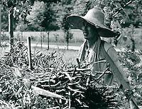 Landwirtschaft in China 1980