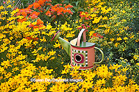 63821-205.09 Watering can birdhouse in garden with Threadleaf Coreopsis (Coreopsis verticillata 'Golden Showers' Common Rue (Ruta graveolens) and Butterfly Milkweed (Asclepias tuberosa)  Marion Co. IL