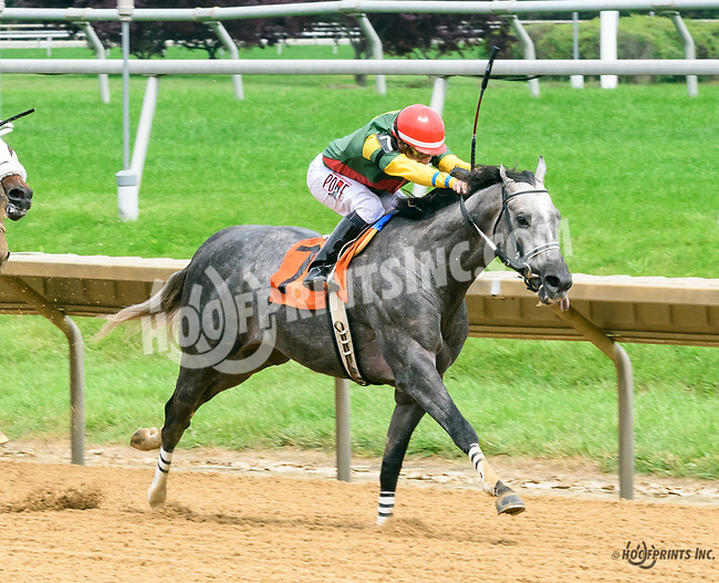 Nfusion winning at Delaware Park on 6/8/17