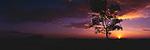www.travel-lightart.com, ©Paul J. Trummer, Asia, Countries, Country, Geography, Thailand, Asien, Geografie, Länder, Siam, Staat, Staaten, Ko Jam Island, near Krabi, , beach, beaches, coast, coastal landcsapes, coastline, coastlines, coasts, landscape, landscape form, landscape forms, landscapes, sand, sandy beach, sandy beaches, Küste, Küsten, Küstenlandschaft, Landschaftsform, Landschaftsformen, Meeresstrand, Sandstrand, Sandstrände, Straende, insel, Inseln, islands, Andaman Sea, bodies of water, body of water, Indean Ozean, ocean, oceans, ozeans, seas, Andamanensee, Gewässer, Indian ozean, Indischer Ozean, Meer, Meere, Ozeane, Baum, Bäume, Botanik, Flora, Lebewesen, Natur, Pflanze, Pflanzen, Vegetation, botanic, botany, living being, nature, plant, plants, tree, trees, Gestirn, Gestirne, Himmelskoerper, Himmelskörper, Licht, Sonne, Sonnen, Sonnenschein, Sonnenuntergaenge, Sonnenuntergang, Sonnenuntergänge, celestial bodies, celestial body, celestial bodys, light, sun, sunset