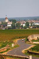 Winding road through the vineyard with Beaune village. Biker. Pommard, Cote de Beaune, d'Or, Burgundy, France
